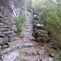 Un escalier impressionnant, bordé d'un mur de pierres, en pleine forêt