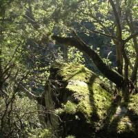 vue de la forêt aux alentours de la Tour Carrée